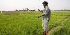 Grâce aux investissements consentis par le gouvernement pour booster le secteur, les importations de riz au Sénégal ont reculé de près de 15% durant la période 2015-2016.