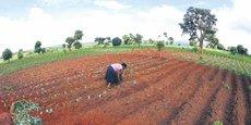 Au Malawi, le gouvernement adopte une politique d'austérité depuis 2015, limitant ainsi les dépenses publiques, notamment les subventions agricoles et la masse salariale.