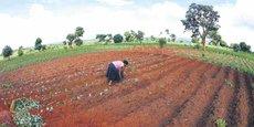 L'agriculture traditionnelle (ici au Malawi) devra se moderniser si l'Afrique veut contribuer à nourrir les 9 milliards d'humains qui peupleront la planète en 2050.