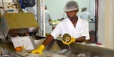 A Madagascar, I&P participe à hauteur de 35% dans le capital de SCRIMAD, une entreprise spécialisée dans la transformation de fruits en purées surgelées et l'exportation de litchis, notamment vers les marchés européens.