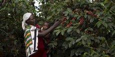 L'Ethiopie, premier producteur africain de café et troisième fournisseur mondial d'arabica a exporté son café vers 57 destinations dans le monde.