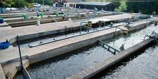 Au Cameroun, le nouvel agropole de production piscicole de Bazou a déjà permis la création d'une quarantaine d'emplois directs et plus de 150 indirects.