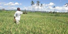 A fin décembre dernier, l'excédent alimentaire de la Tanzanie était estimé à quelque 3 millions de tonnes.