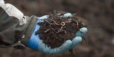 L'utilisation de lombrics, l'idée lumineuse pour éviter l'impact environnemental du gaspillage alimentaire.