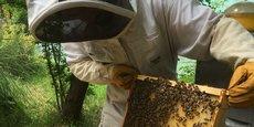 l'université Paul-Sabatier va installer au mois d'avril prochain cinq ruches équipées de capteurs pour suivre l'état de santé des colonies d'insectes.