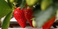 DES PESTICIDES DANS PRÈS DE TROIS QUARTS DES FRUITS, SELON UN RAPPORT