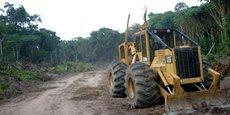 LA RDC APPROUVE L'ABATTAGE DE FORÊTS DANS UNE ZONE RICHE EN CO²