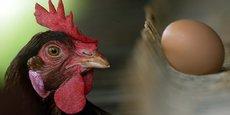 spoutnic, poule, agtech, agritech