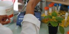 Micropep a mis au point des traitements pour les plantes sans OGM et sans intrants chimiques.