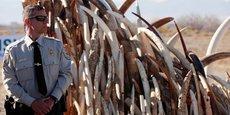 Le 1er mars 2018, l'Administration Trump a publié un mémorandum, avec effet immédiat, autorisant l'importation de défenses et de peaux d'éléphants en provenance de l'Afrique du Sud, du Botswana, de la Namibie, de la Tanzanie, de la Zambie et du Zimbabwe.