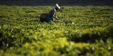 Au Rwanda, les recettes des exportations, soutenues par une forte production agricole, ont atteint un total de 943,5 millions de dollars en 2017, soit une hausse de 57,6% par rapport aux recettes des volumes exportés en 2016.