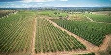 La coopérative exploite 1 800 ha de vignes