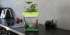 Citizenfarm a imaginé un aquarium capable de faire pousser des plantes aromatiques et des fraises.