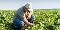 L'agriculture et l'agroalimentaire représentent près de 14 % des emplois français