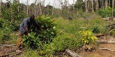 Le nouvel appui de la Banque mondiale sera destiné principalement au secteur agricole en Côte d'Ivoire.