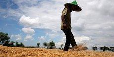 Les personnes vivant en zone rurale sont presque deux fois plus susceptibles d'être employées dans l'économie informelle que celles des zones urbaines, et l'agriculture est le secteur affichant le plus haut niveau d'emploi informel, estimé à plus de 90%, explique l'OIT.