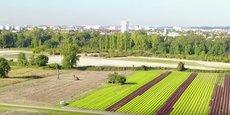 Blagnac a acheté une partie des 135 hectares de la zone maraîchère des Quinze Sols.