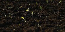 L'etat de washington legalise le compost humain
