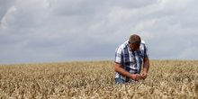 agriculteur blé france