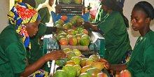 Mangue Mali