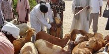 niger élevage