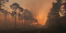 Incendie au Okefenokee National Wildlife Refuge, Georgia, 2017
