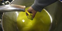 Huile d'olive oléiculture trituration agroalimentaire agro industrie