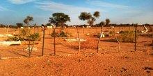 Mauritanie agriculture