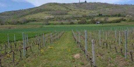 vins d'Auvergne