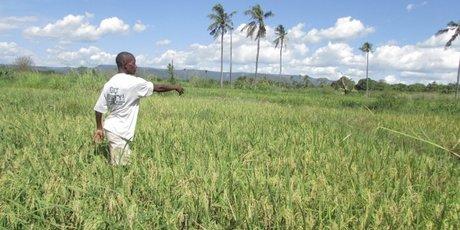 tanzanie fermier agriculture foncier