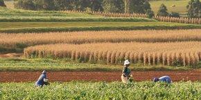 L'entreprise toulousaine a décroché trois projets en Côte d'Ivoire, au Pérou et en Indonésie.