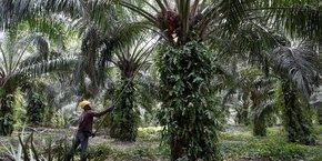 Total produit actuellement du carburant à base d'huile de palme dans la nouvelle bioraffinerie de La Mède (Bouches-du-Rhône), près de Marseille.