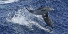 Plus de 600 dauphins se sont échoués sur le golfe de Gascogne depuis début décembre 2020.