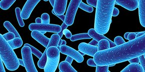 Deinove va explorer une sélection ciblée de souches issues de sa collection bactérienne de l'Institut Pasteur