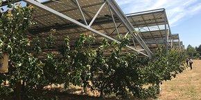 A Bellegarde, l'expérimentation a consisté à installer 5,9 MWc au-dessus de cultures abricotières, de cerisiers et de raisin de table.