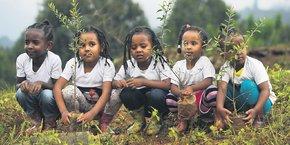 Le 29 juillet, la population éthiopienne a planté 350.000 arbres en 12 heures, dans le cadre du programme gouvernemental visant à atteindre le nombre de 4 milliards au mois d'octobre.