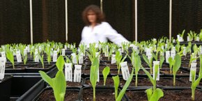L'alimentation sera l'un des secteurs concernés par le Green New Deal.