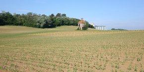 L'Occitanie est depuis quelques années la première région bio de France.