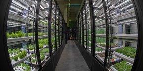 Les 23 variétés de plantes proposées en France ne contiennent ni de pesticides chimiques ni d'OGM, et sont vendues aux prix du bio.