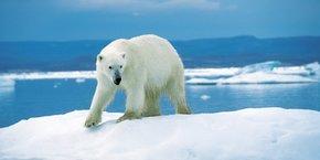 Place de la Bourse à Paris, la sculpture d'un ours sur un iceberg viendra interpeller les épargnants sur les questions d'impact environnemental de nos placements à l'occasion de la semaine de l'investissement responsable.