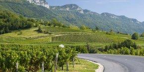 Image d'illustration de vignes de Savoie.