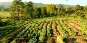 Pionniers de la permaculture en France, Charles et Perrine Hervé-Gruyer produisent autant sur 1.000 mètres carrés qu'un maraîcher bio sur 1 hectare avec tracteur.