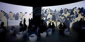 Au Musée des Confluences, l'exposition Antarctica témoignait d'une expérience immersive du visiteur.