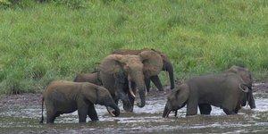 elephants gabon
