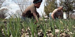 Detroit, agriculture urbaine,