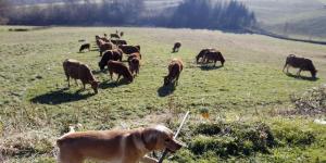 Les députés examinent la loi d'avenir pour l'agriculture