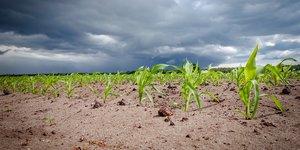 Champs agriculture éleveurs
