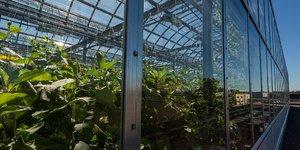 Lufa farms, fermes, serre urbaine,
