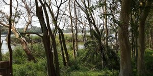 Bois forêt énergie