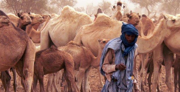 élevage pasteur nomade élevage camelin